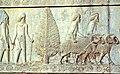 Relieffries in Persepolis.jpg