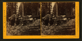 Remains of the Father of the Forest, Mariposa Grove, Mariposa County, Cal, by Watkins, Carleton E., 1829-1916.png
