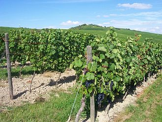 Rhenish Hesse - Vineyards Rheinhessen