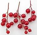 Ribes glandulosum (skunk currant berries) (near Larchwood, Ontario, Canada) (46843445845).jpg