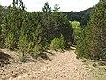 Ridge Bridle Path Ispagnac Col de Montmirat 6349.JPG