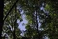 Rievaulx Terrace MMB 23.jpg