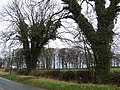 Roadside Trees - geograph.org.uk - 145950.jpg