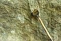 Rock art from Sierra Leone (West Africa) (748135469).jpg