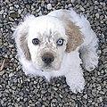 Romeo as a Puppy.jpg
