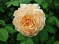 Rosa Grace 2019-06-07 1298.jpg