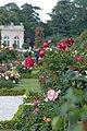 Roses à Bagatelle - panoramio.jpg