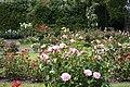 Roses inNational Botanic Garden,Dublin,Ireland - panoramio.jpg