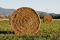 Round hay bale at dawn.jpg