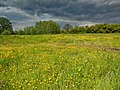 Rowington - panoramio.jpg