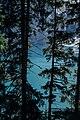 Ruderboot auf Oeschinensee hinter Bäumen.jpg