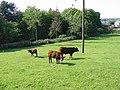 Rural scene - geograph.org.uk - 468029.jpg