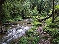 Sacred forest, Mawphlang, Meghalaya.jpg