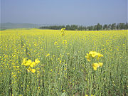 Grasslands of Chengde, Hebei Province, North China.