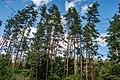 Sakaliny local biological reserve p03.jpg