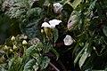 Sandakan Sabah Sunbird-in RDC-03.jpg