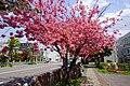 Sapporo Kita-ku Kita 26 Nishi 6-chome - panoramio.jpg