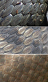 Scales grass snake (top), adder & smooth snake (bottom).png