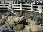 Seals and Penguins Hobart 20171120-091.jpg
