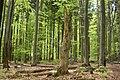 Selský les.jpg