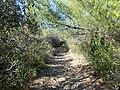 Sentier Caunes Minervois 1.jpg