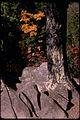 Shenandoah National Park SHEN9221.jpg