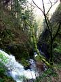 Shepperds Dell SNA - Oregon.png