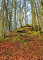 Sihlwald Schnabelburg grass.jpg