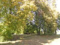 Skuodo II senosios kapinės 2011b.JPG