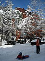 Sled on Q Street, N.W..JPG