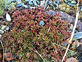 Small Plant (22513474062).jpg