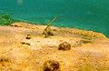 Snorkeling Front Porch, Bonaire (12840749875).jpg
