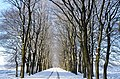 "Snow covered Beech lanes gives nices walkingpossibilities at ""Oud Reemst"" forest and heather - panoramio.jpg"