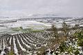 Snowy landscape El Saucejo-129.jpg