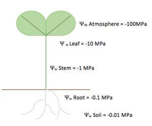 Soil plant atmosphere continuum - Image: Soil Plant Air Continuum