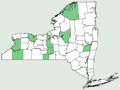 Solidago canadensis var hargeri NY-dist-map.png