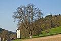 Sommerlinde bei Schaltberg 2014-03 01 NÖ-Naturdenkmal AM-053.jpg