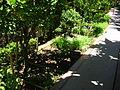 Spice Garden (3714600013).jpg