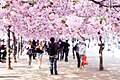 Spring (68196387).jpeg
