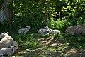 Spring Lambs by Nick 25.jpg