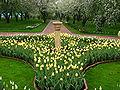 Spring flowerbed from tulips 01.JPG