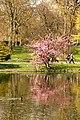 Spring in London (6970532064).jpg