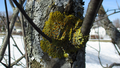 Spring lichens 03.png