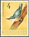 Stamp of Albania - 1964 - Colnect 342896 - Eurasian Nuthatch Sitta europaea.jpeg
