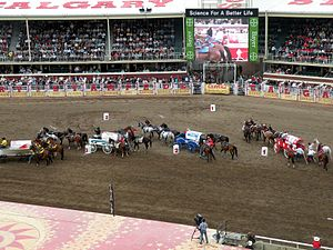 Chuckwagon racing - Wagons lined up before the start of a race