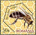 Stamps of Romania, 2010-01.jpg