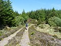 Staoisha Forest Track - geograph.org.uk - 1361846.jpg