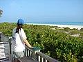 Starr-080531-4693-Scaevola taccada-habit with Kim-Captain Brooks Sand Island-Midway Atoll (24910586375).jpg
