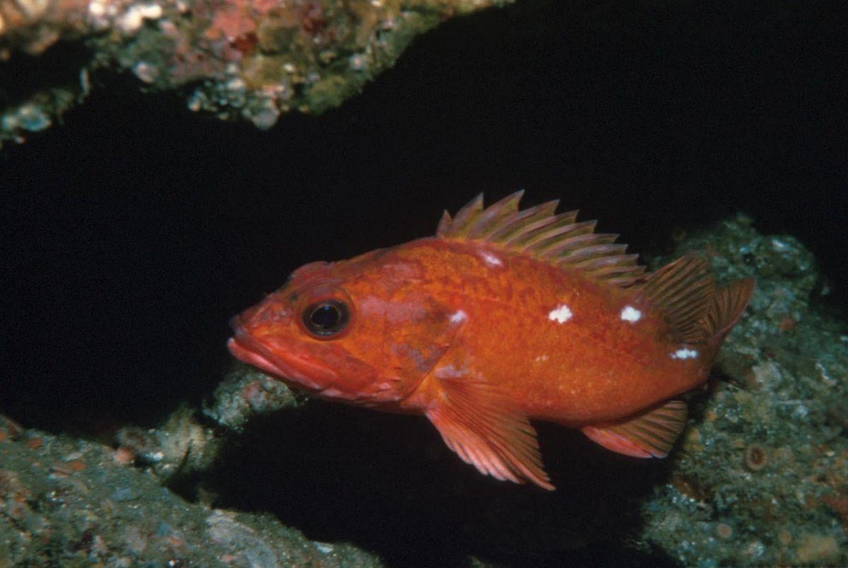 Natural Fish Body Oil