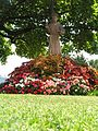 Statua dei S. Antonio - panoramio.jpg
